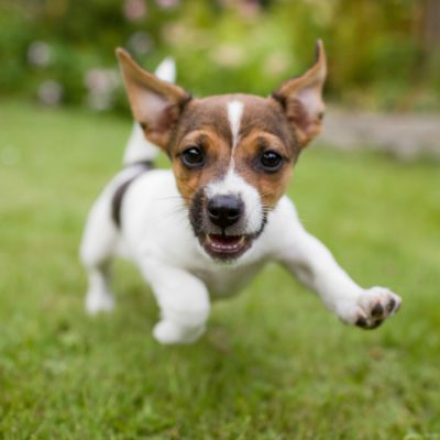 The 10 Most Popular Dog Names Of 2016