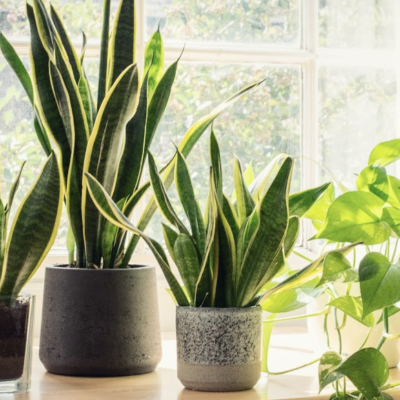House Plants You Can't Kill