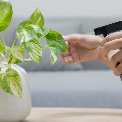 Give indoor plants the same love they give us: Indoor Plant Care 101